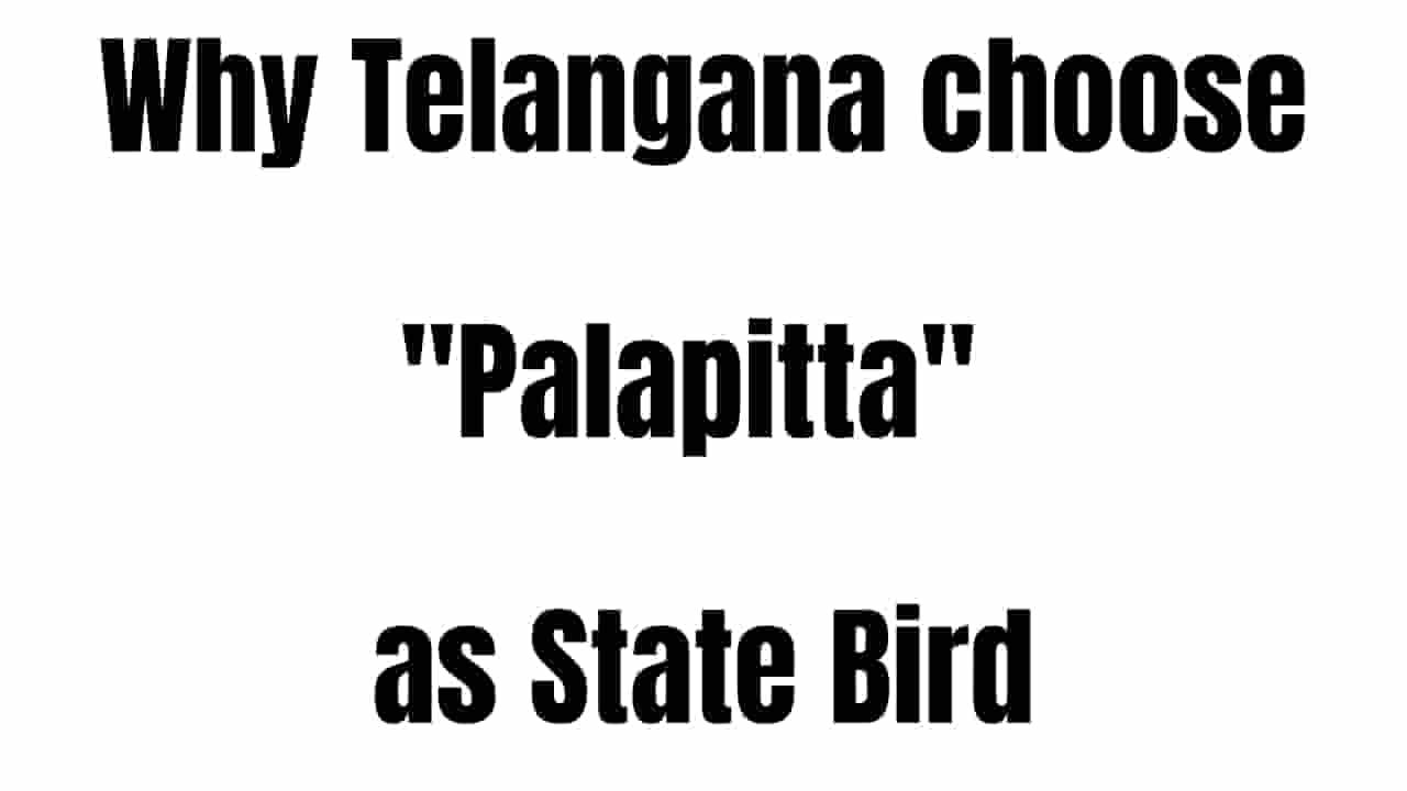 Telangana State Bird Palapitta